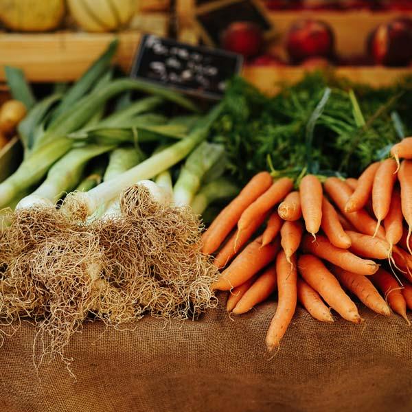 Harvested root vegetables at Sylvan Shade Farm