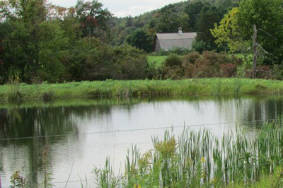 Sylvan Shade Farm pond view